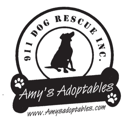 Amy's Adoptables | 911 Dog Rescue